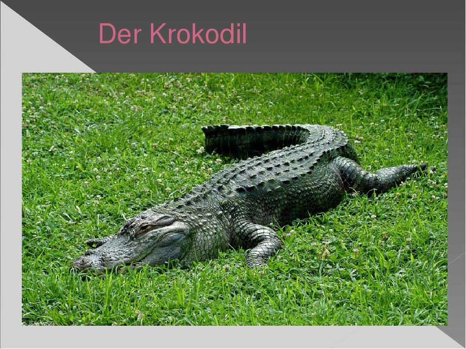 Der Krokodil