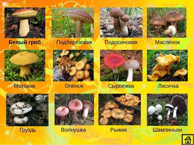 остаются список всех грибов с картинками наличие спинки