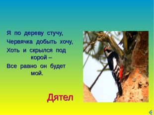 Дятел Я по дереву стучу, Червячка добыть хочу, Хоть и скрылся под корой – Все