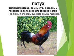 петух Домашняя птица, самец кур, с красным гребнем на голове и шпорами на ног