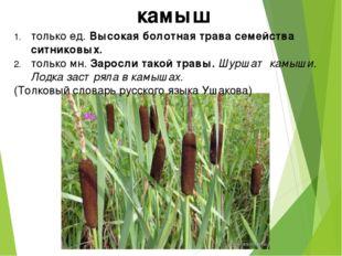 только ед. Высокая болотная трава семейства ситниковых. только мн. Заросли та
