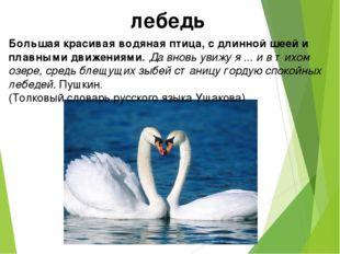 лебедь Большая красивая водяная птица, с длинной шеей и плавными движениями.