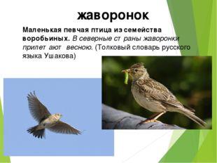 Маленькая певчая птица из семейства воробьиных. В северные страны жаворонки п
