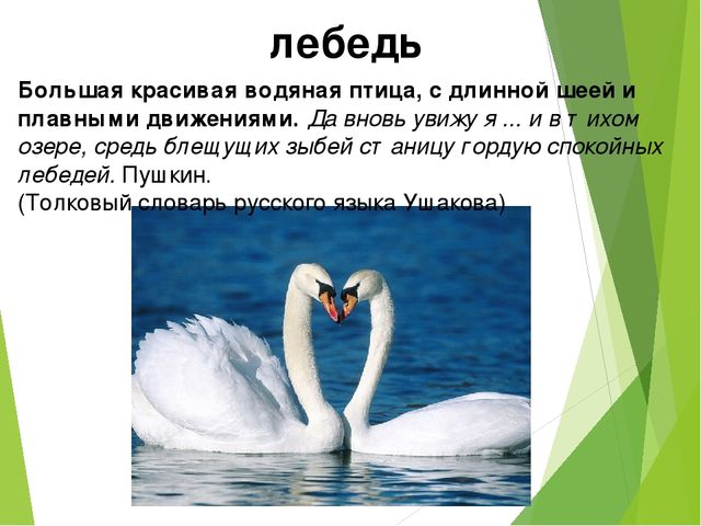 лебедь Большая красивая водяная птица, с длинной шеей и плавными движениями....