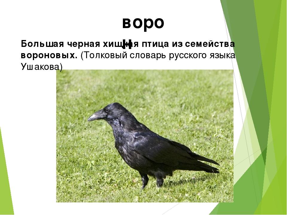 ворон Большая черная хищная птица из семейства вороновых. (Толковый словарь р...