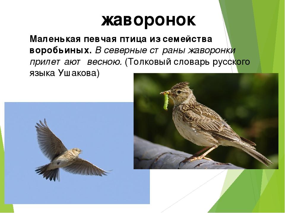 Маленькая певчая птица из семейства воробьиных. В северные страны жаворонки п...