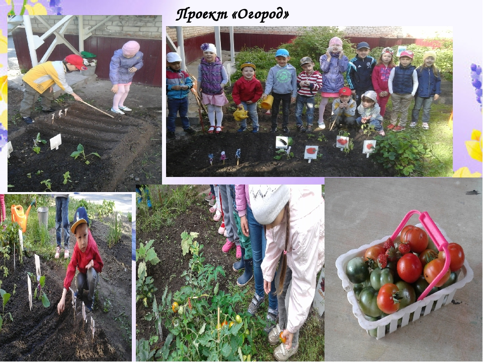 Проект «Огород»