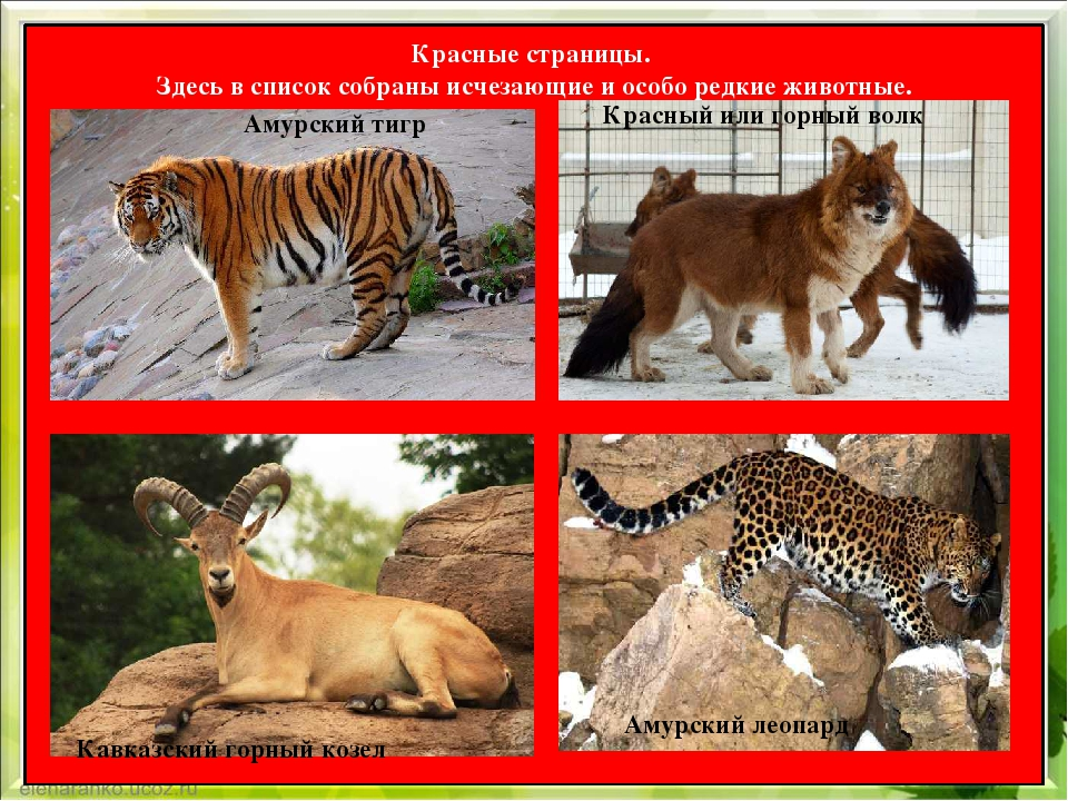 животные из красной книги россии фото и картинки интересные