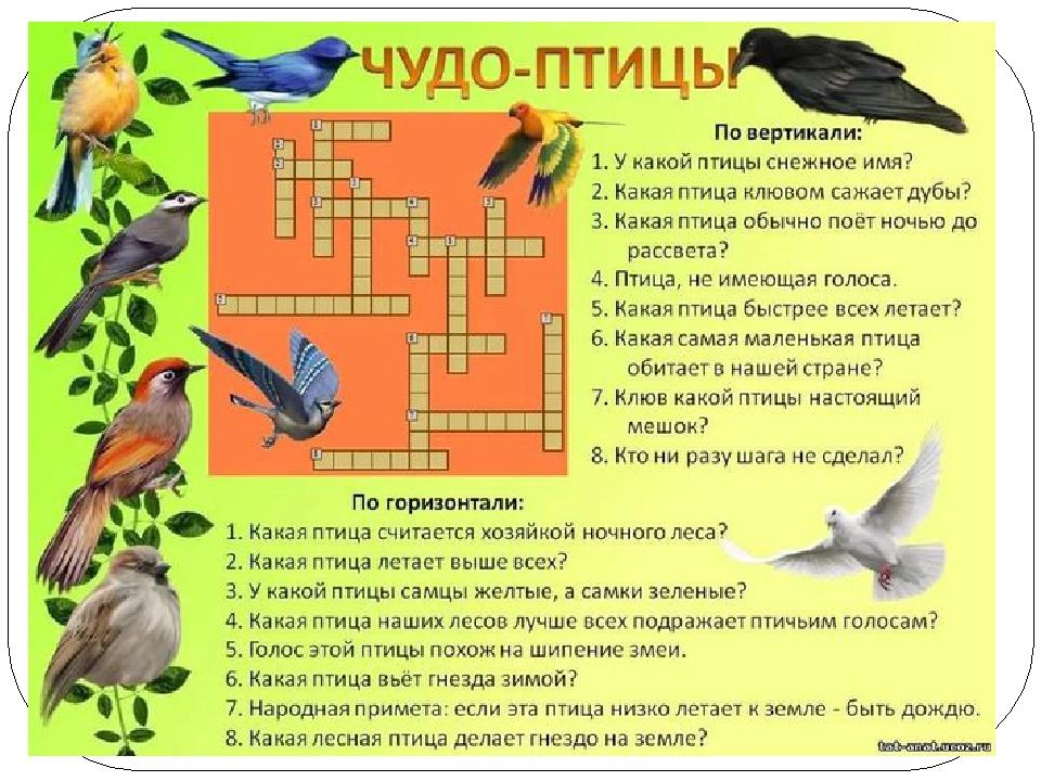 гдз по кросвордам по беологии о птицах
