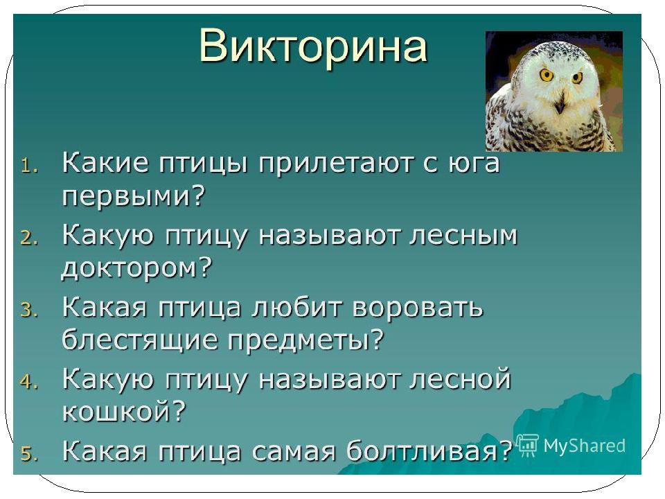 викторина о птицах картинка электричку