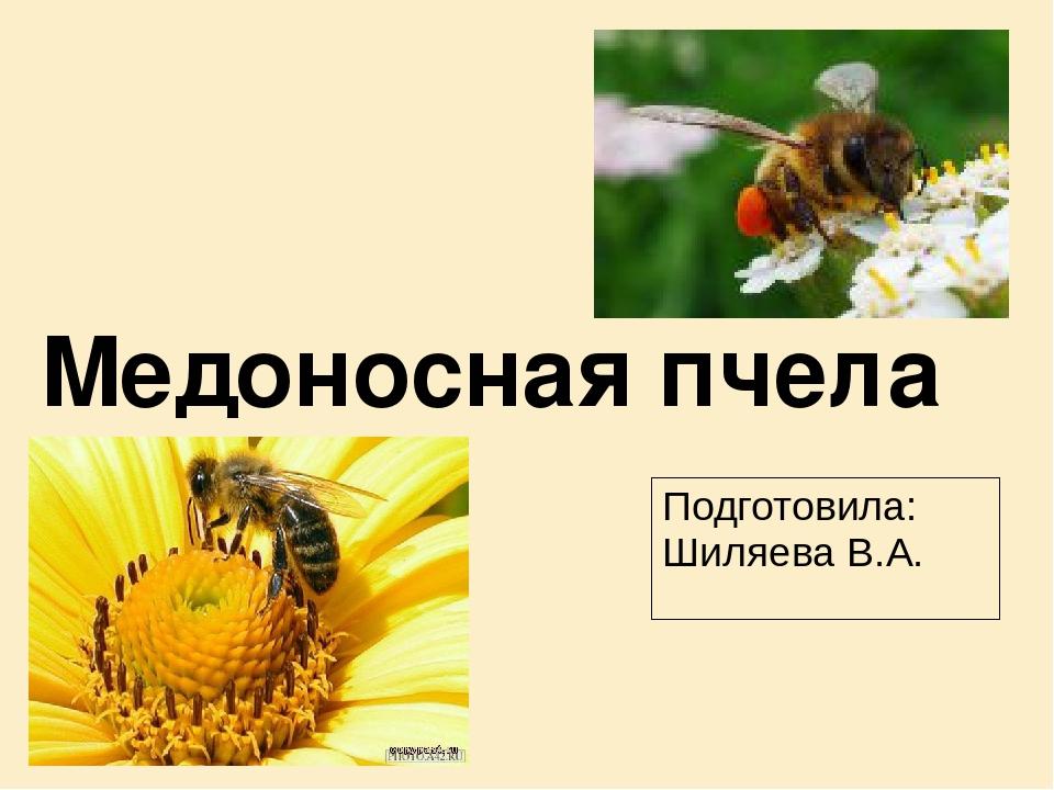 Скачать бесплатно программы о пчелах скачать программу подбора запчастей