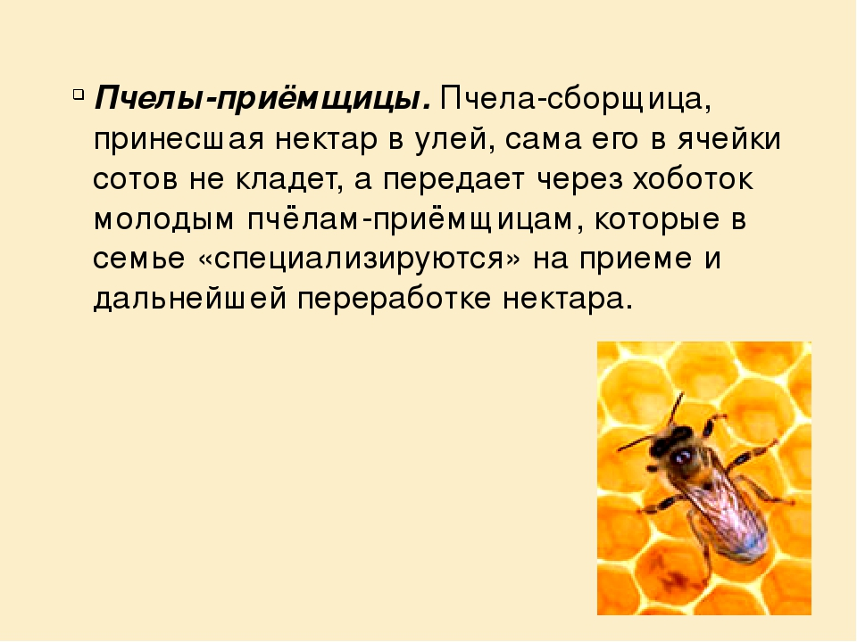 Презентация на тему пчеловодство картинки