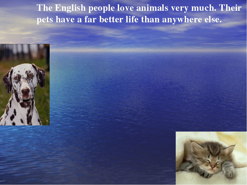 The English people love animals very much. Their pets have a far better life...