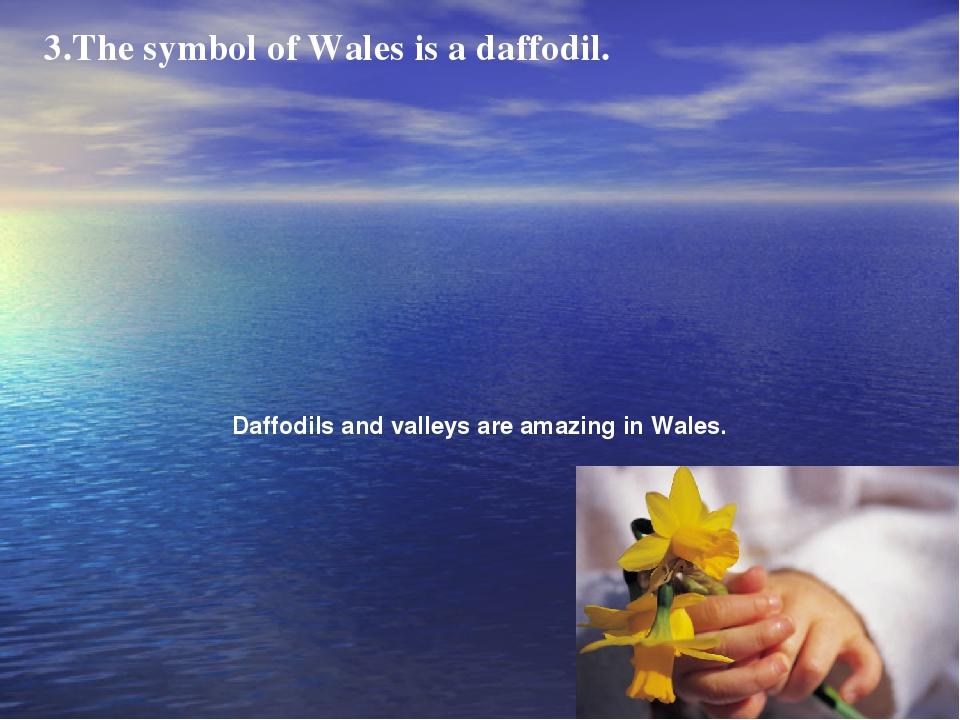 3.The symbol of Wales is a daffodil. Daffodils and valleys are amazing in Wal...