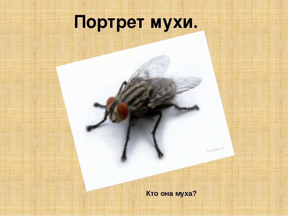 Доклад по биологии мухи 8906
