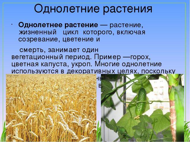 Растения сада конспект урока 2 класс пнш