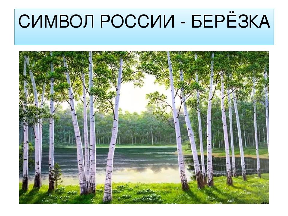 Береза как символ россии