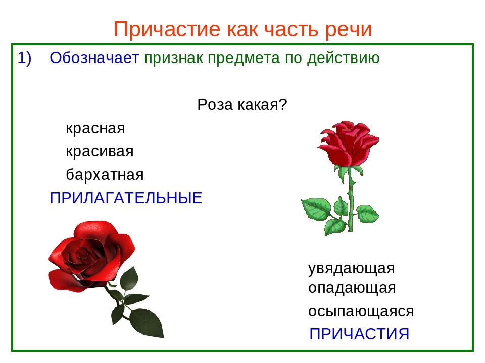 Причастие картинки русский