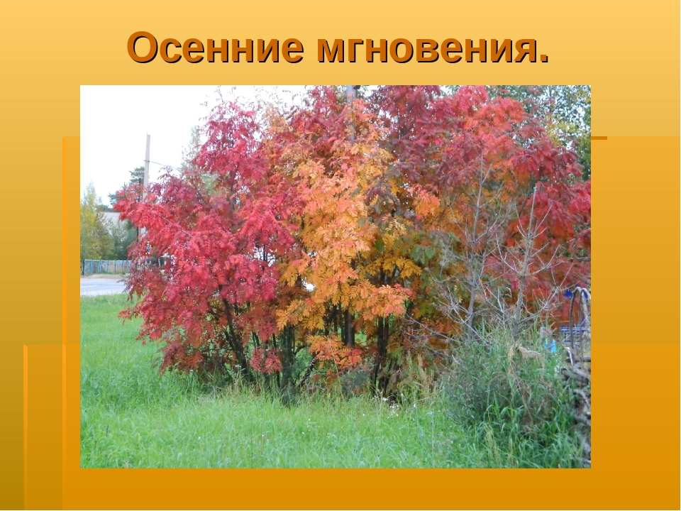Осенние мгновения.