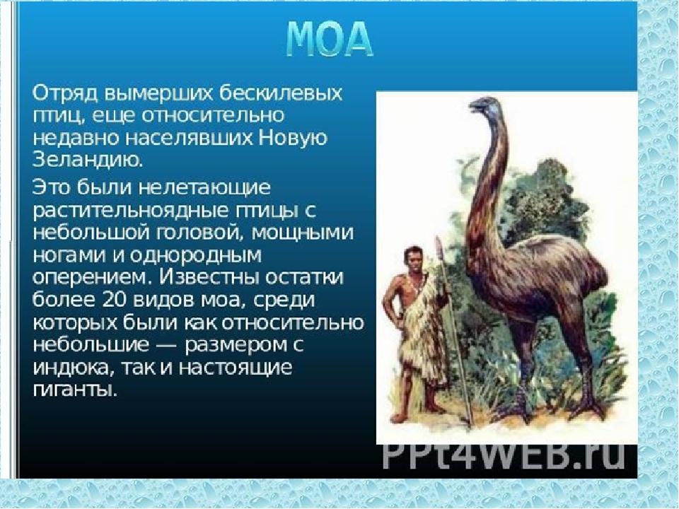 Название динозавров фото с названиями