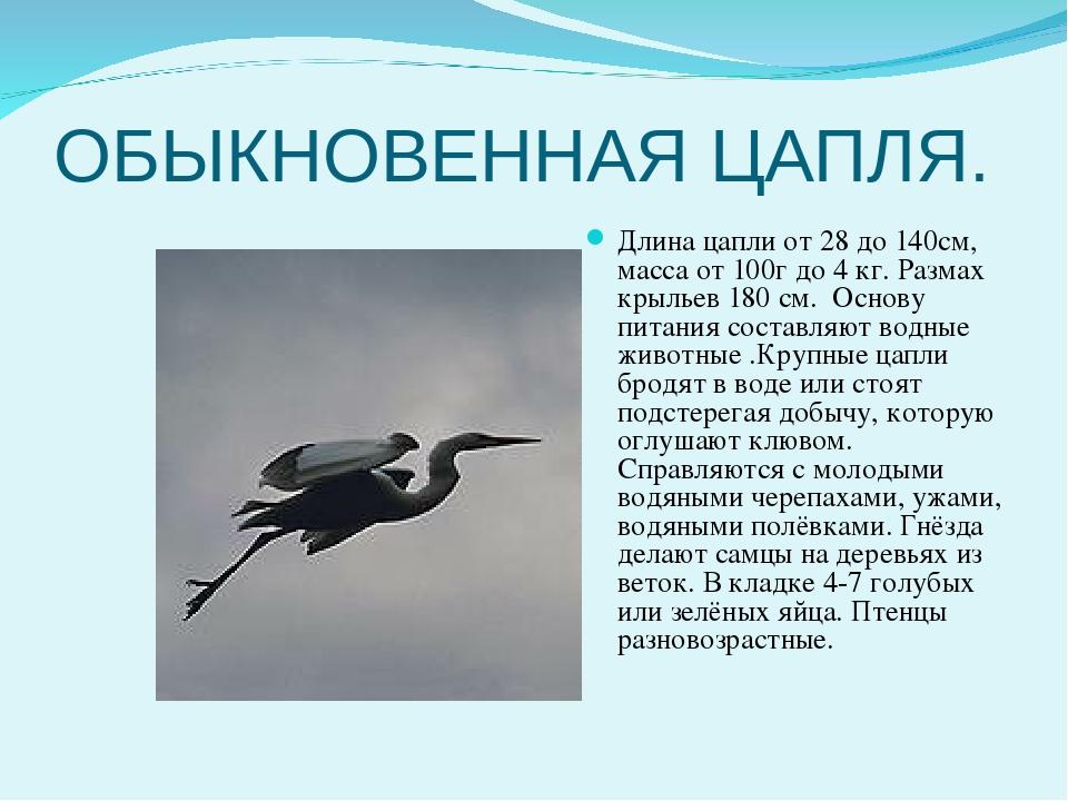 Размах крыльев цапли