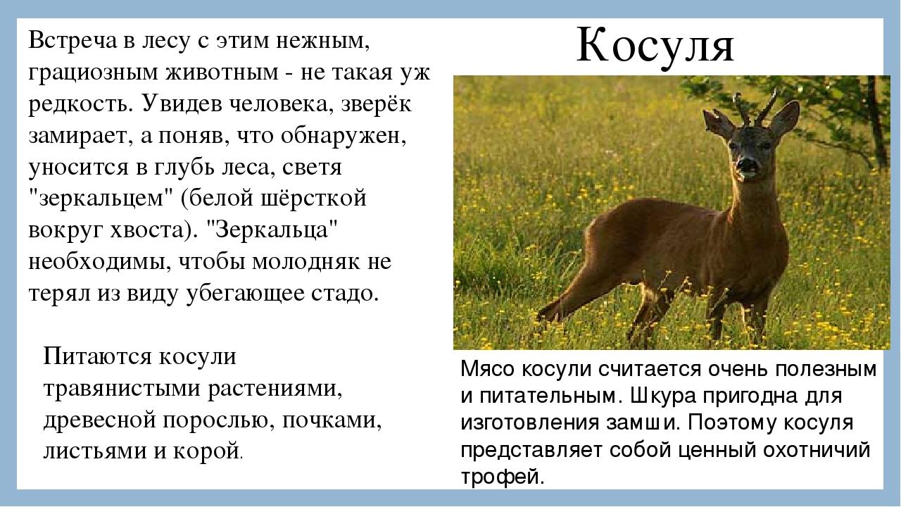 Thus : фото животные мира занесенные в красную книгу