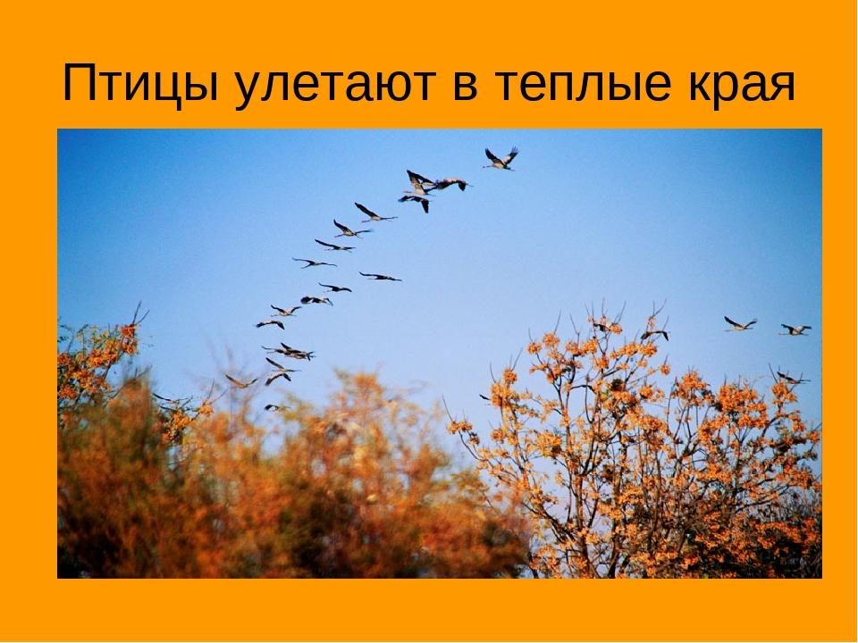 Картинки как птицы улетают в теплые края