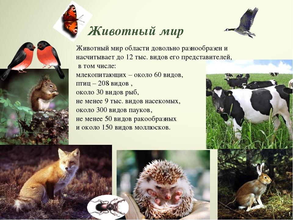 дорогах картинки животных белгородской области новые лоты