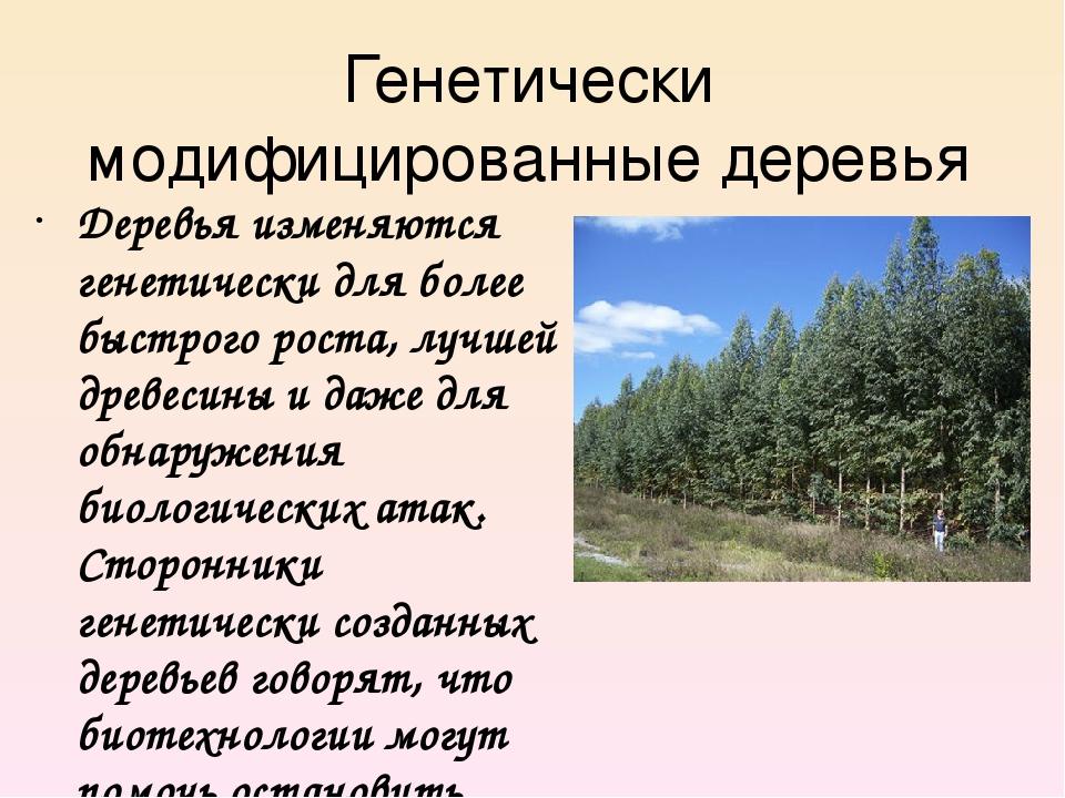 Генетически модифицированные деревья Деревья изменяются генетически для более...
