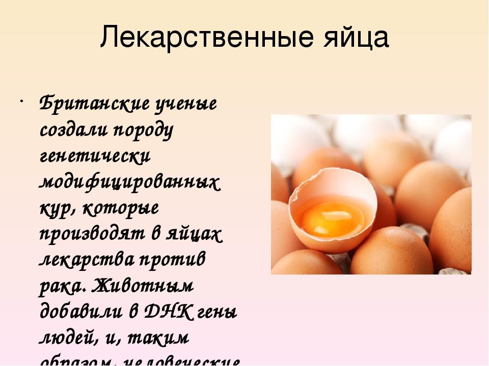 Лекарственные яйца Британские ученые создали породу генетически модифицирован...