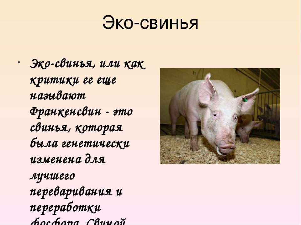 Эко-свинья Эко-свинья, или как критики ее еще называют Франкенсвин - это свин...
