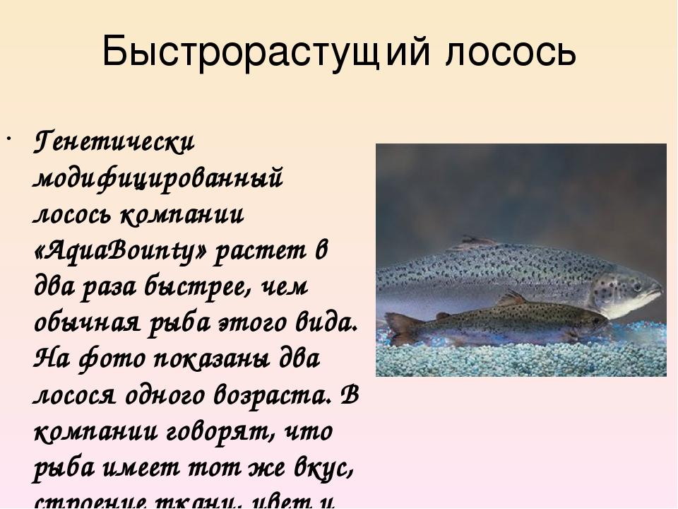 Быстрорастущий лосось Генетически модифицированный лосось компании «AquaBount...