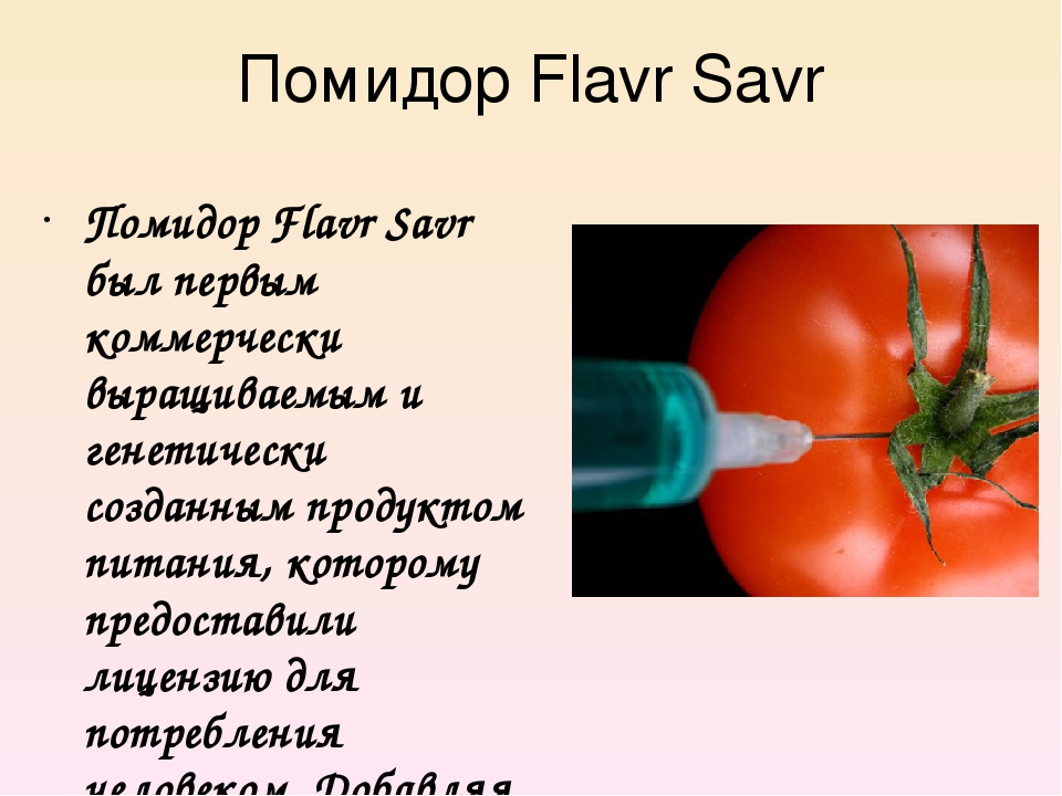 Помидор Flavr Savr Помидор Flavr Savr был первым коммерчески выращиваемым и г...