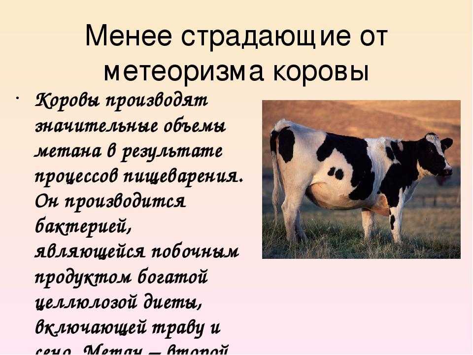 Менее страдающие от метеоризма коровы Коровы производят значительные объемы м...