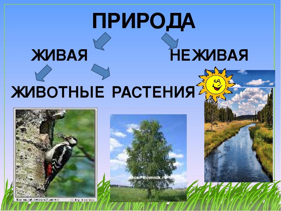 Связь между объектами живой и неживой природы фото