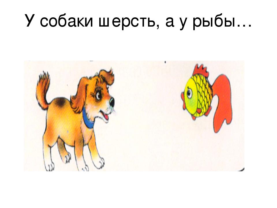 У собаки шерсть, а у рыбы…