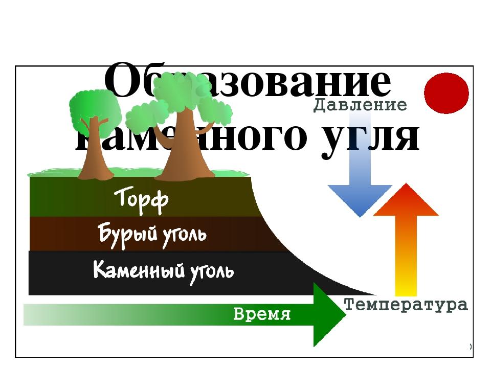 Образование угля картинки