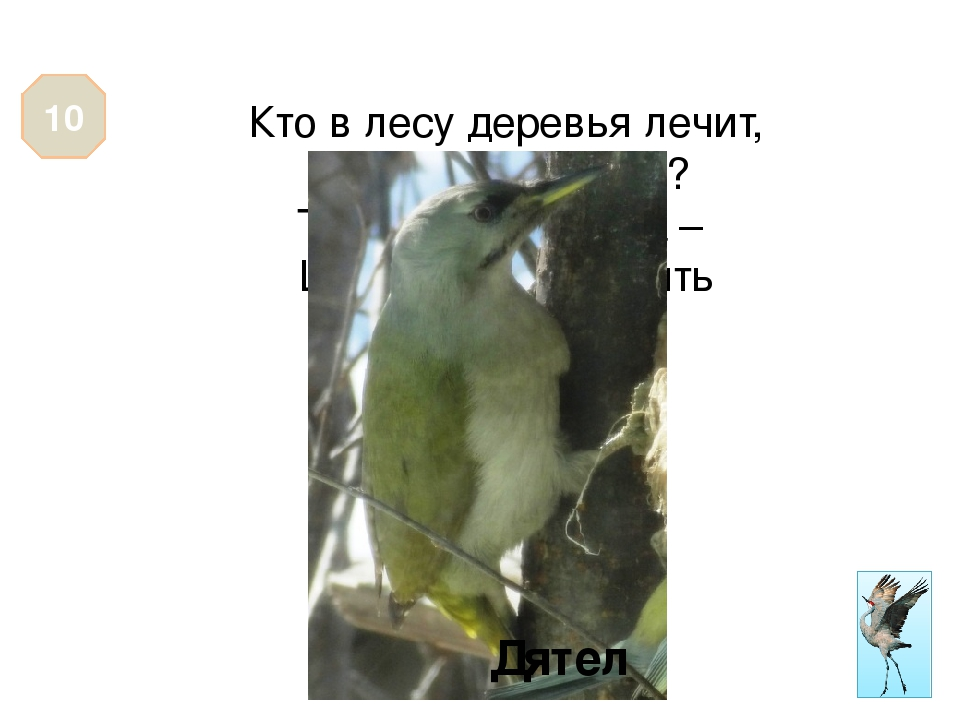 Эта птица на своём хвосте разносит новости по лесу. 10 Сорока