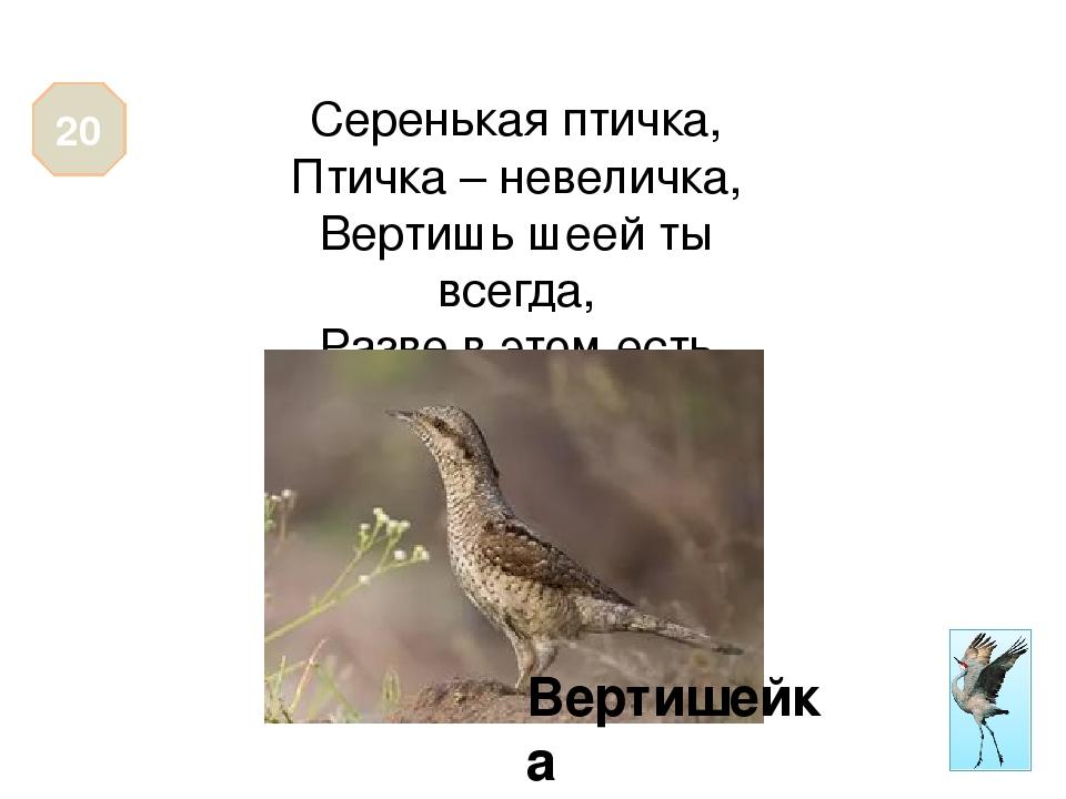 Литература. Ботаника. Зоология. Химия. А. Тарасов.Смоленск, «Русич»,1999. Зан...