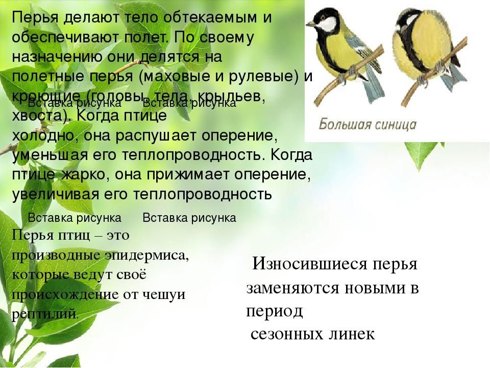 Перья птиц – это производные эпидермиса, которые ведут своё происхождение от...