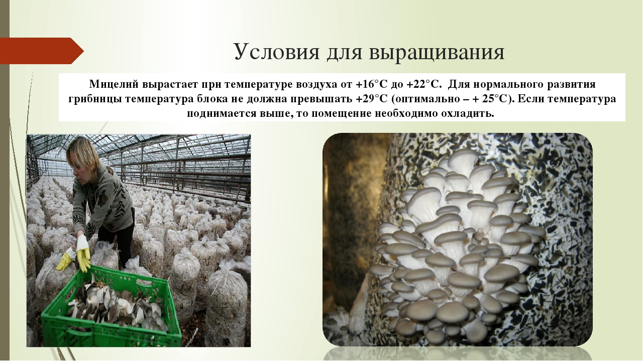 Технология выращивания грибов в до 552