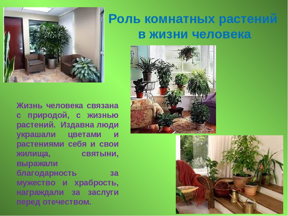 Значение комнатных цветов в доме с фото