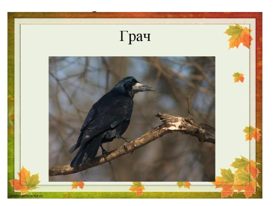 По весне к нам с юга мчится Черная, как ворон, птица. Для деревьев наших врач...