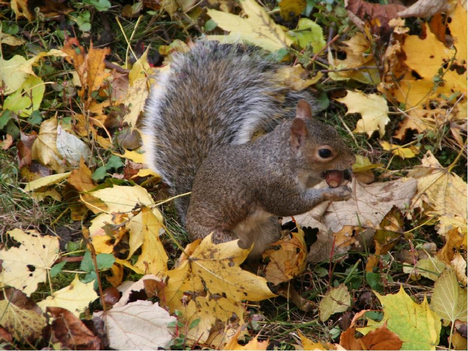 интернациональный осень картинки животные готовятся к зиме местного клуба также