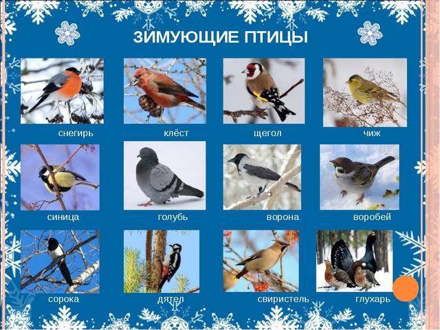 какие птицы обитают в алтайском даже