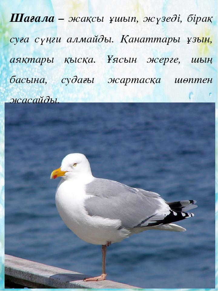 Ойын клубы Красноярск