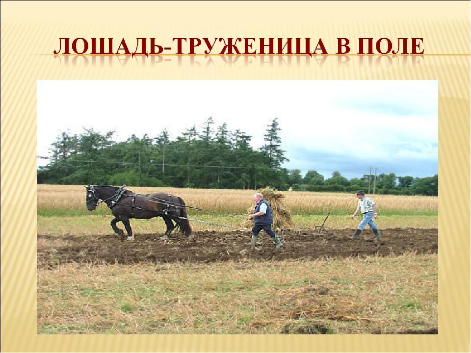 картинка польза лошади для человека глине