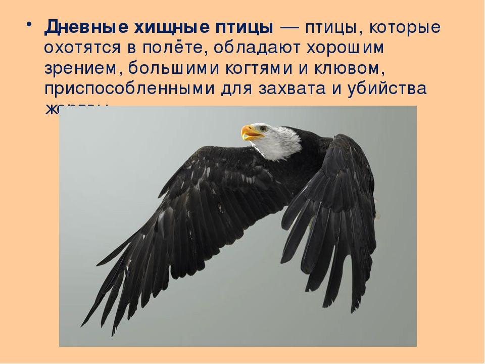 Дневные хищные птицы— птицы, которые охотятся в полёте, обладают хорошим зре...