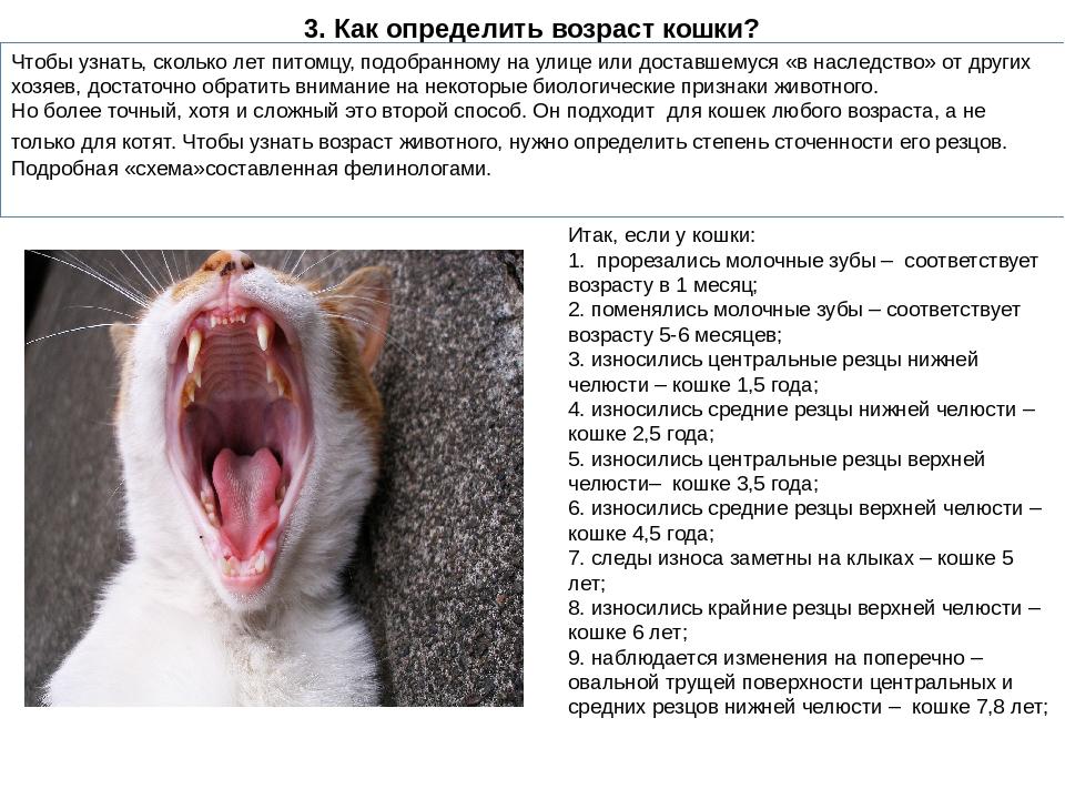 как определить возраст котенка по зубам фото только срок
