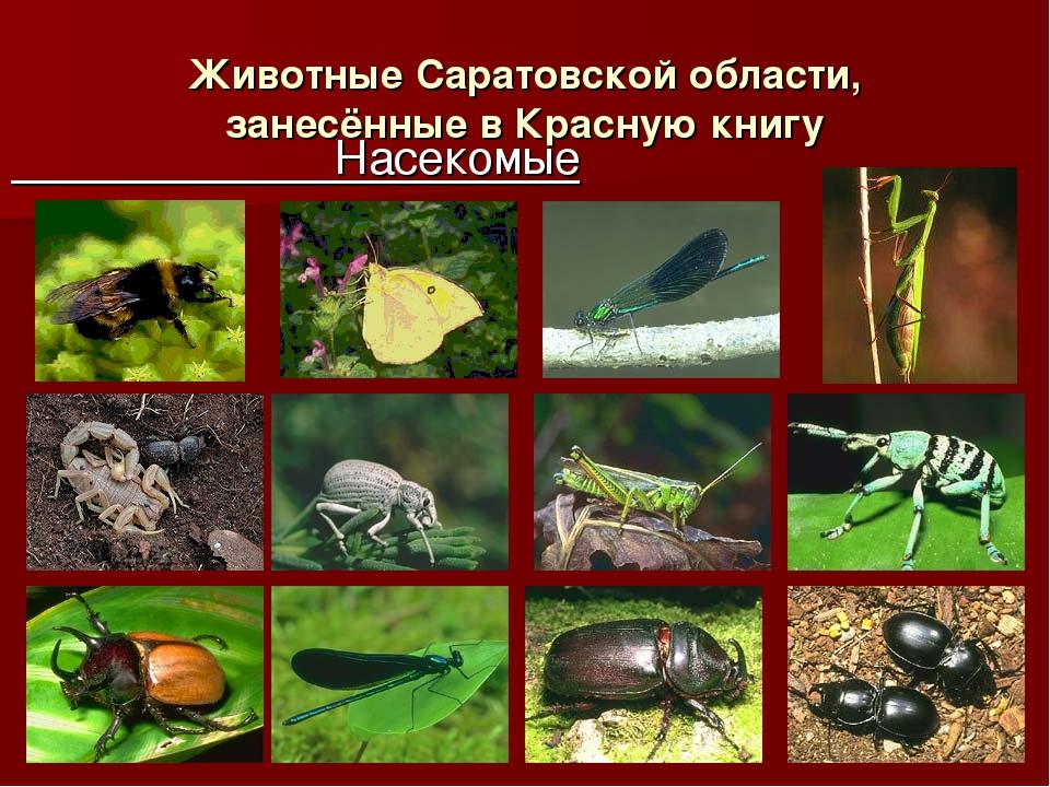 Животные Саратовской области, занесённые в Красную книгу Насекомые